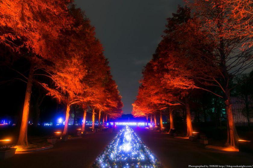 長居公園 植物園 ガーデンイルミネーション 2013 01