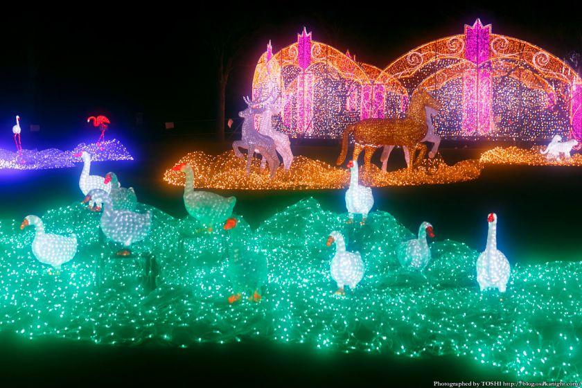 大阪城 イルミネーション 2013 光の回廊 03