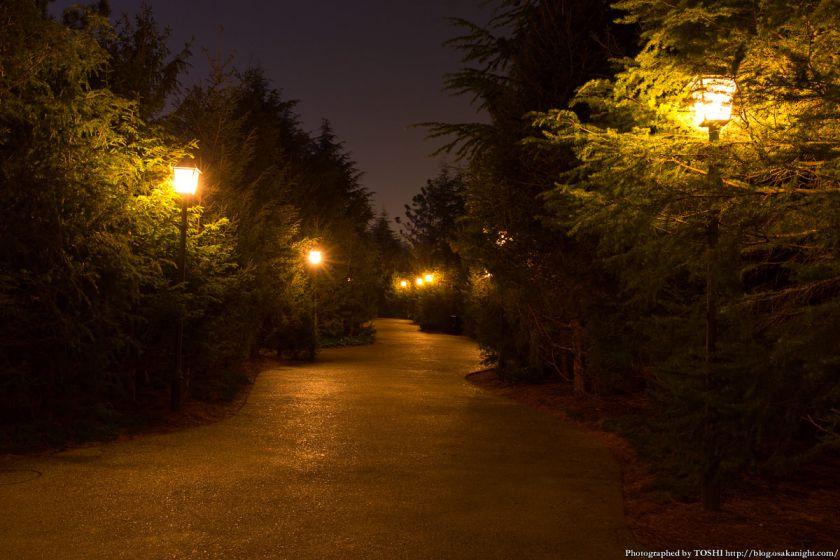 USJ ウィザーディング・ワールド・オブ・ハリー・ポッター ホグズミード村へと続く森 夜景