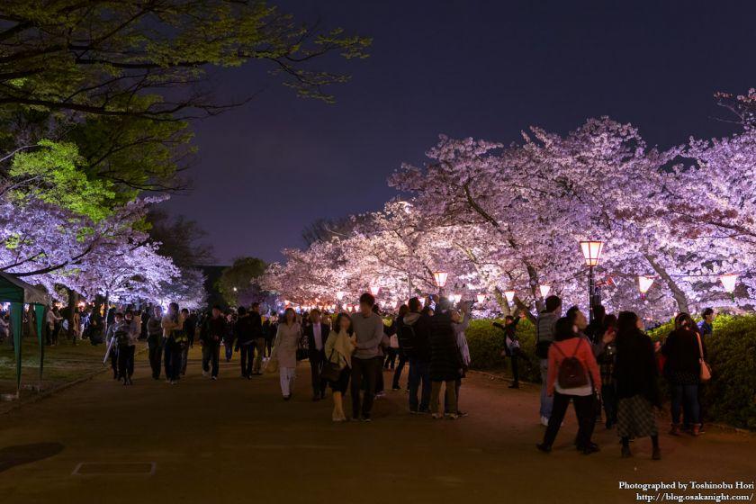 大阪城西の丸庭園 観楼ナイター 2017 01