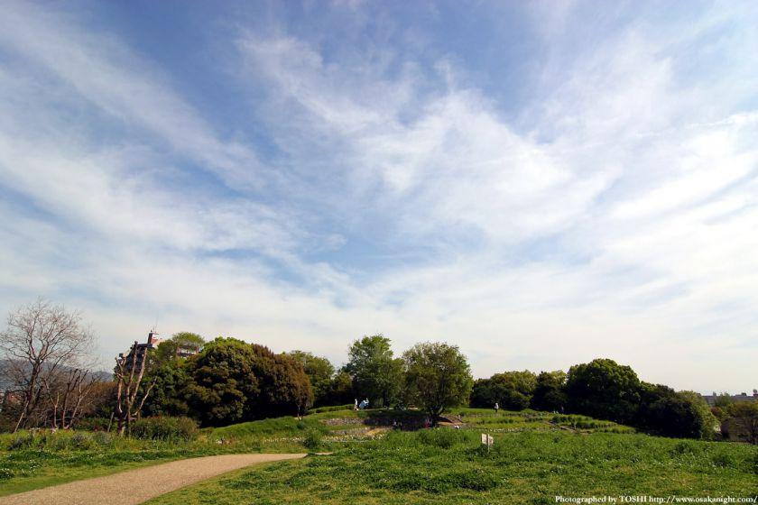 鶴見緑地の新緑と空